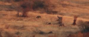 hajnali rudli bb